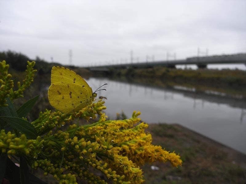 さいたま市の電車と秋の蝶_c0045352_16114618.jpg