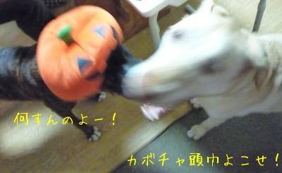 f0177261_160452.jpg