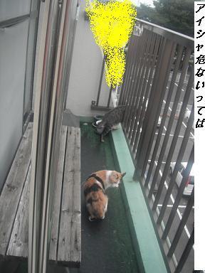 b0112380_18423662.jpg