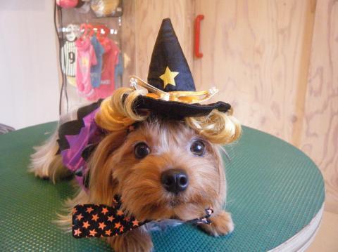 ★Happy Halloween★ 3_b0186183_17182268.jpg