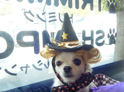 ★Happy Halloween★ 3_b0186183_17191372.jpg