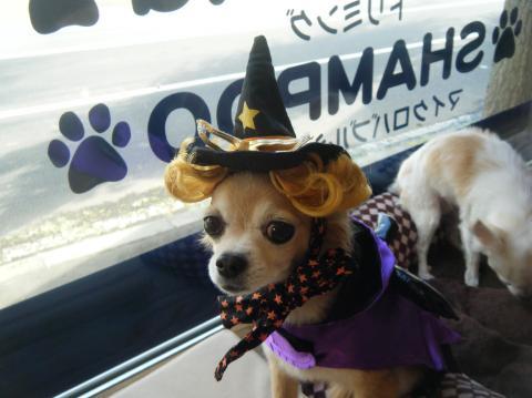 ★Happy Halloween★ 3_b0186183_17193295.jpg