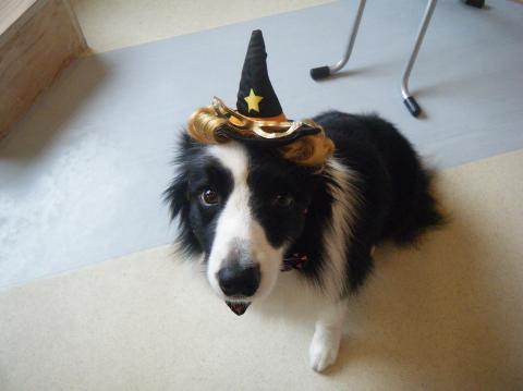 ★Happy Halloween★ 3_b0186183_17202695.jpg