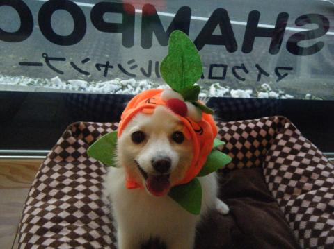 ★Happy Halloween★ 3_b0186183_1720493.jpg