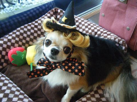 ★Happy Halloween★ 3_b0186183_17223375.jpg