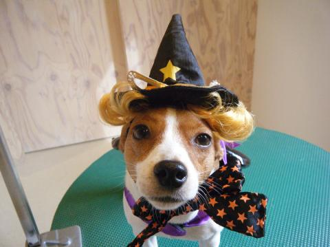 ★Happy Halloween★ 3_b0186183_1722895.jpg