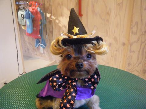 ★Happy Halloween★ 3_b0186183_17234546.jpg
