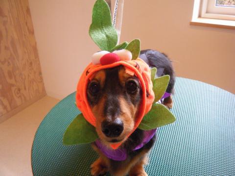 ★Happy Halloween★ 3_b0186183_17252599.jpg