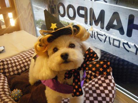 ★Happy Halloween★ 3_b0186183_17262973.jpg