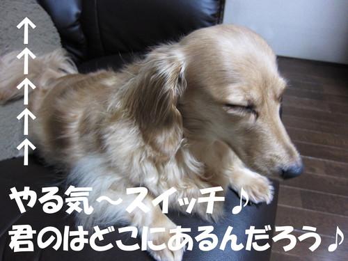 b0200291_1729334.jpg