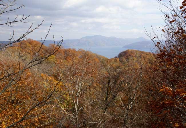 樹海ライン~十和田湖2 二ヶ所の展望台とツグミなど^^_a0136293_17144895.jpg