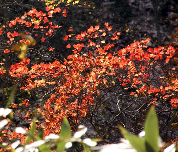 樹海ライン~十和田湖2 二ヶ所の展望台とツグミなど^^_a0136293_17151469.jpg