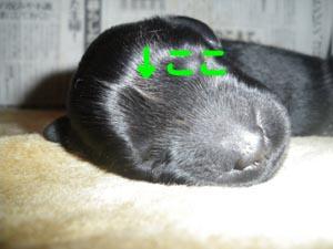 緑くん_b0084194_1634841.jpg
