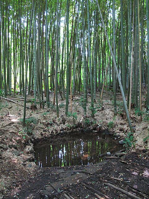 落合川を辿る(4)南沢の湧水群_c0163001_23542190.jpg