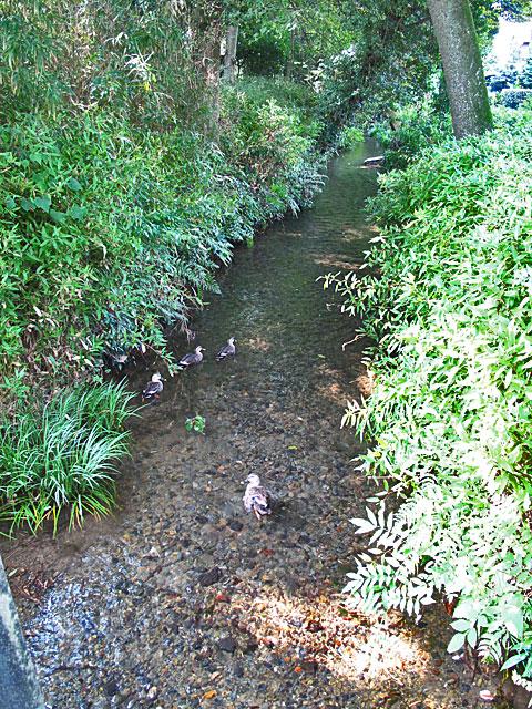 落合川を辿る(4)南沢の湧水群_c0163001_23543243.jpg