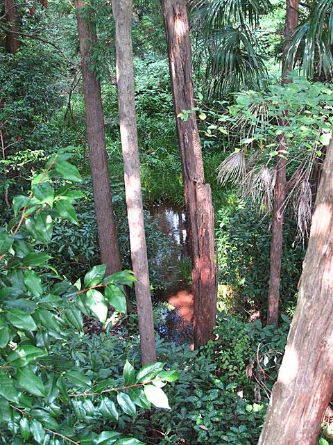 落合川を辿る(4)南沢の湧水群_c0163001_23544783.jpg