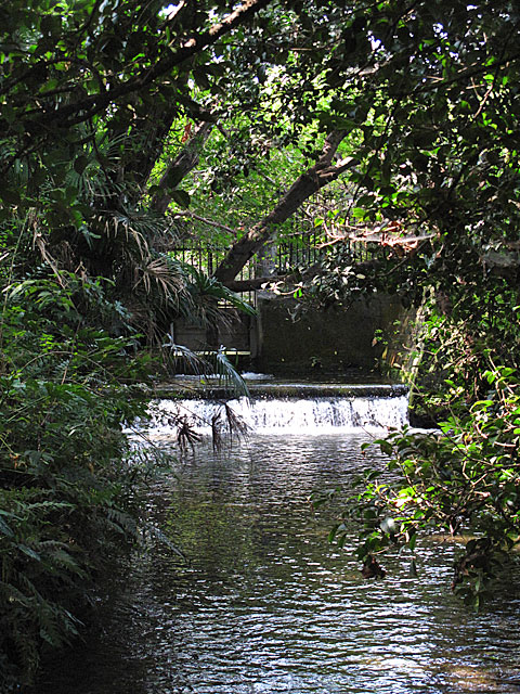 落合川を辿る(4)南沢の湧水群_c0163001_23545975.jpg