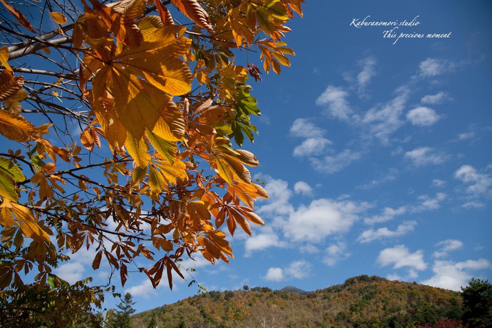 富士見高原から蓼科へ_c0137403_1756944.jpg