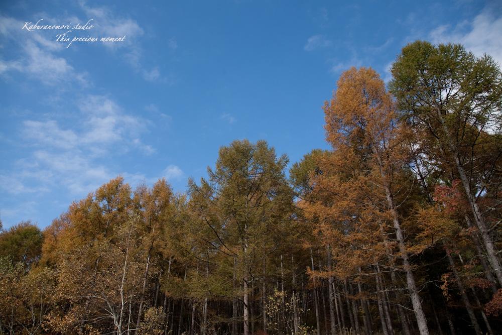富士見高原から蓼科へ_c0137403_18101257.jpg