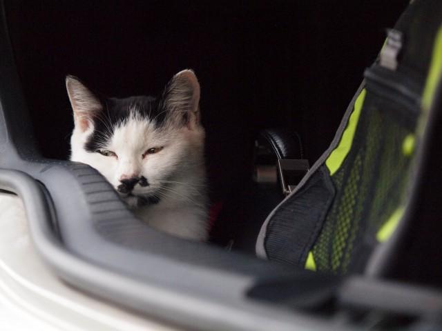 猫は眠いのだ_e0074308_21255726.jpg