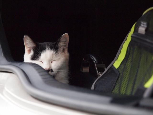 猫は眠いのだ_e0074308_21305187.jpg