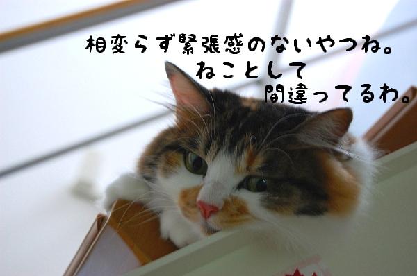 c0181639_025975.jpg