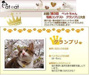グランプリの中のグランプリ猫 ぽー編。_a0143140_231924.jpg