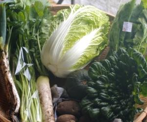 11月2週目 野菜セット不定期便のお知らせ _c0110869_2120227.jpg
