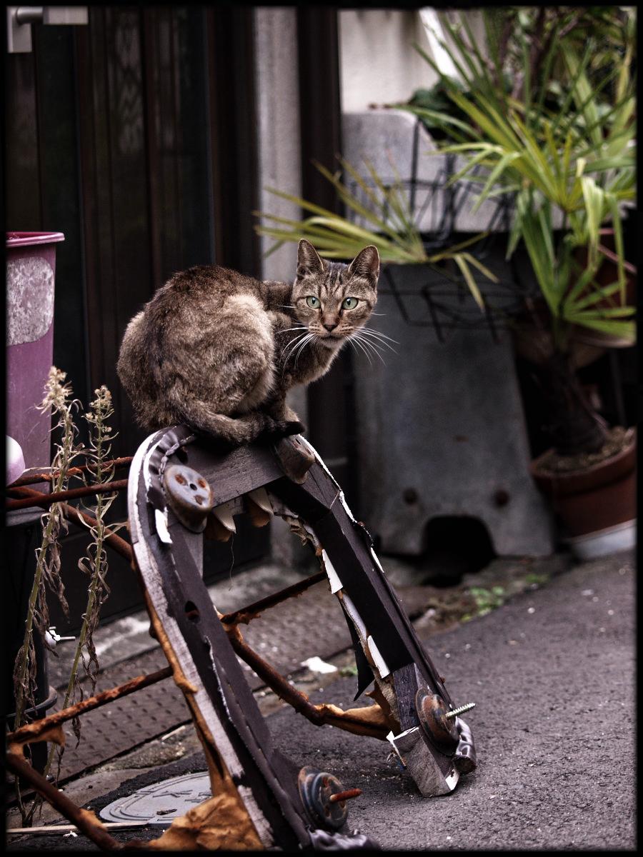 猫にゃん_f0021869_0481654.jpg