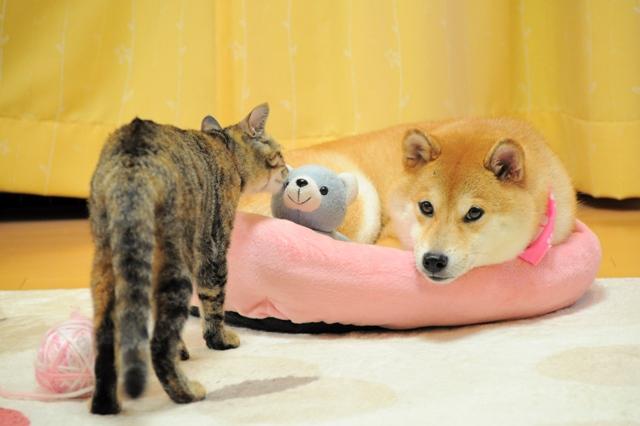 ケンちゃん、元気!?_a0126590_5182281.jpg