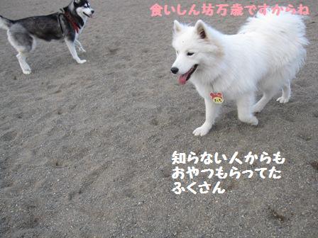 f0212597_1516572.jpg