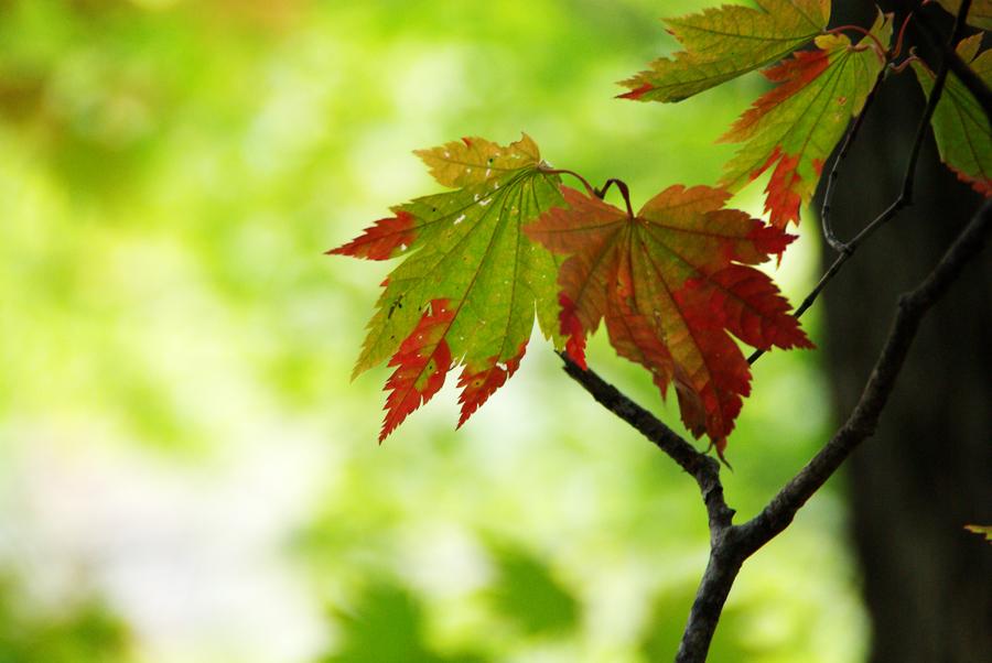 秋の西岡公園③~静かな夕景~(札幌市豊平区)_c0223825_0361492.jpg