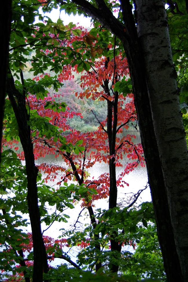 秋の西岡公園③~静かな夕景~(札幌市豊平区)_c0223825_0452391.jpg