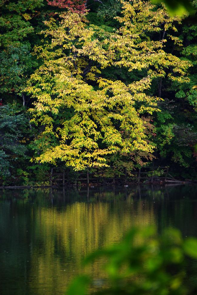 秋の西岡公園③~静かな夕景~(札幌市豊平区)_c0223825_121074.jpg