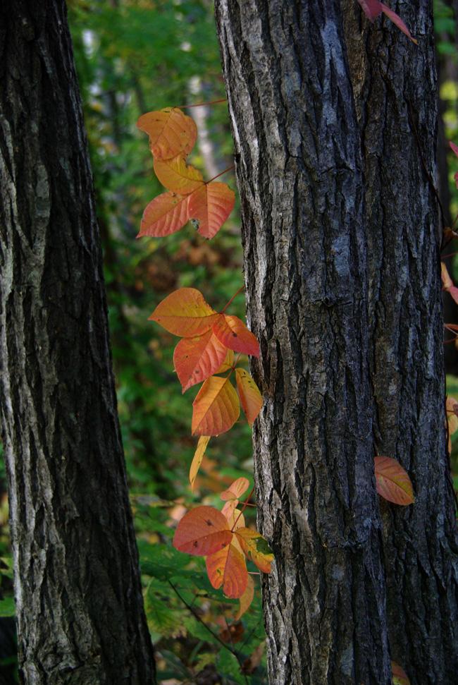 秋の西岡公園③~静かな夕景~(札幌市豊平区)_c0223825_142238.jpg