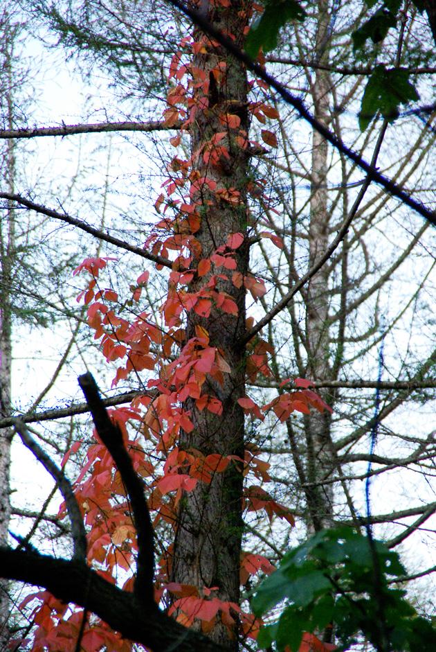 秋の西岡公園③~静かな夕景~(札幌市豊平区)_c0223825_181086.jpg
