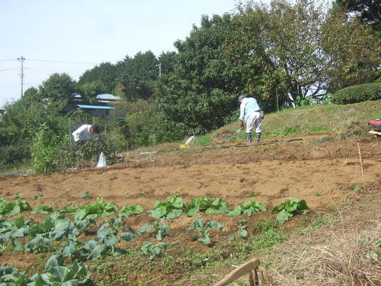 イチゴの植え付け完了!.......富士山も祝福??_b0137932_21283576.jpg