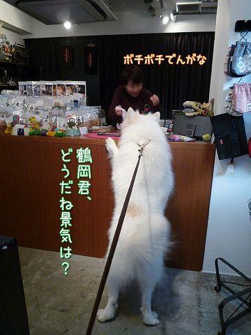 鶴岡大将_c0062832_15482134.jpg