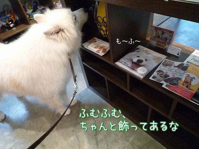 鶴岡大将_c0062832_15482868.jpg