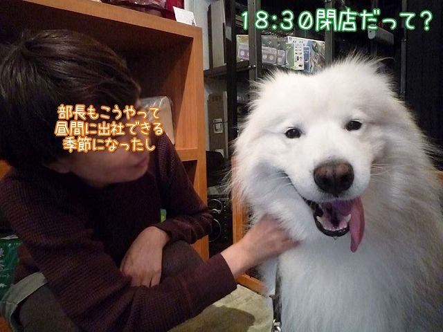 鶴岡大将_c0062832_1548346.jpg