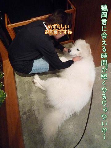 鶴岡大将_c0062832_15484152.jpg