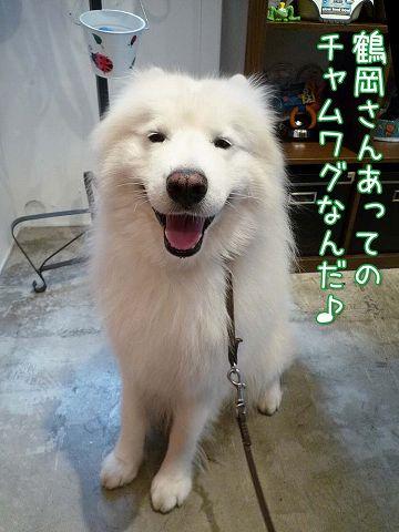 鶴岡大将_c0062832_15491086.jpg