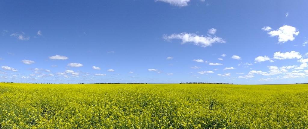 豪州晴れ 西オーストラリア州_f0050534_1691159.jpg
