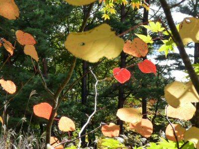 庭の秋_f0019247_2304157.jpg