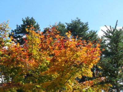庭の秋_f0019247_234348.jpg