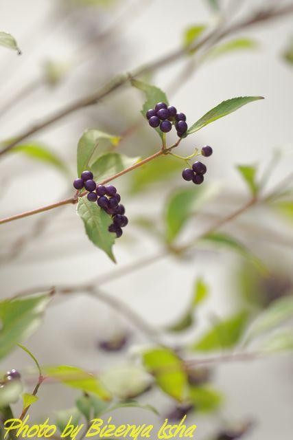 『小紫』_d0086248_2311595.jpg