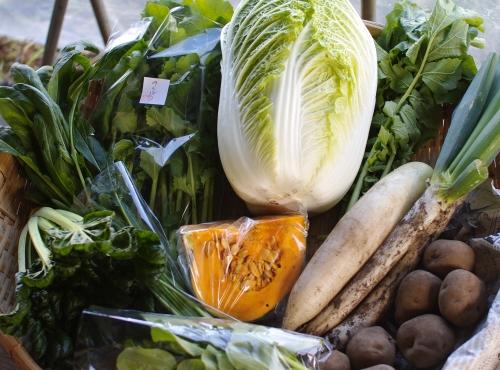 野菜セット不定期便 No.20-水 の発送_c0110869_16133229.jpg