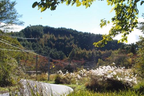 女神湖の紅葉と、女神湖食堂_c0110869_16472364.jpg