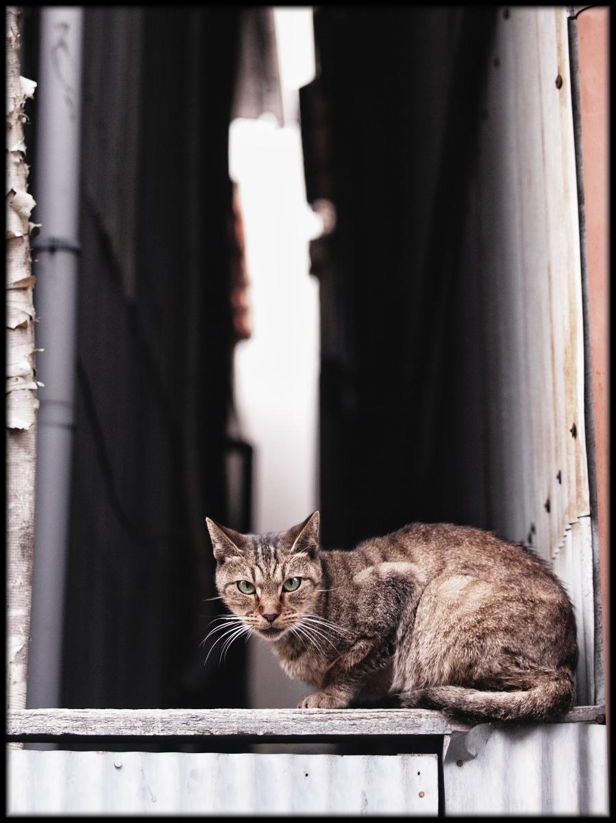 猫にゃん_f0021869_22443249.jpg