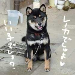 伊佐蔵とレイカ_b0057675_10302775.jpg